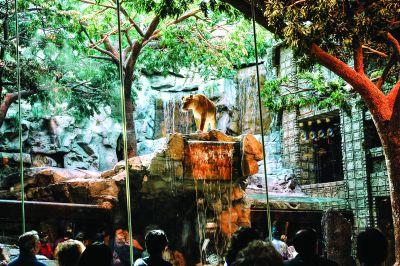 SECRETELE CAZINOURILOR (XXII)  Ferma animalelor, altfel: conceptul din spatele rezervației de lei marca MGM